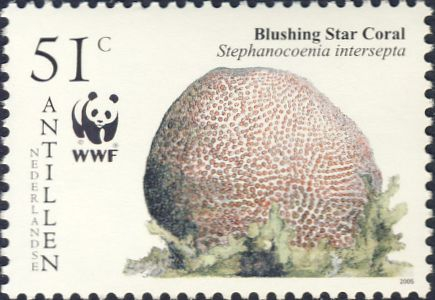 Stephanocoenia intersepta