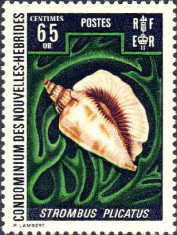 Strombus plicatus