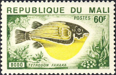 Tetraodon fahaka