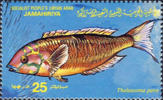 Thalassoma pavo