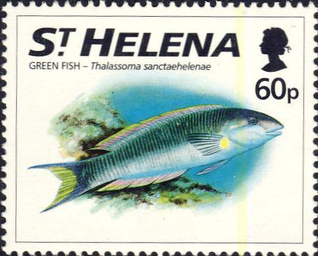 Thalassoma sanctaehelenae