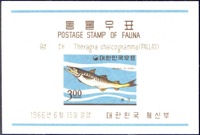 Theragra chalcogramma