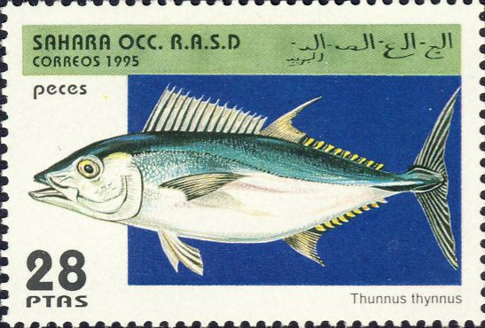 Thunnus thynnus