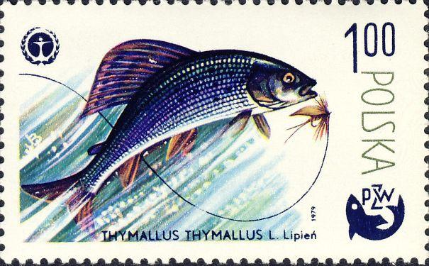 Thymallus thymallus