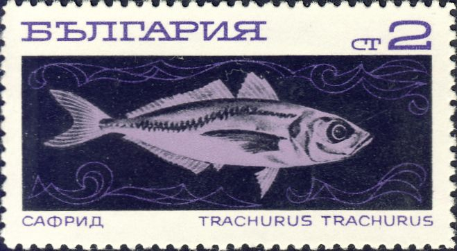 Trachurus trachurus