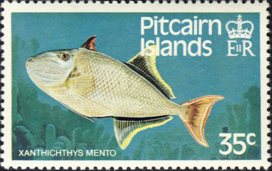 Xanthichthys mento