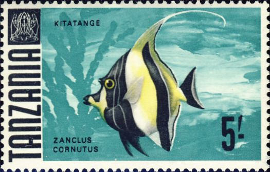 Zanclus cornutus