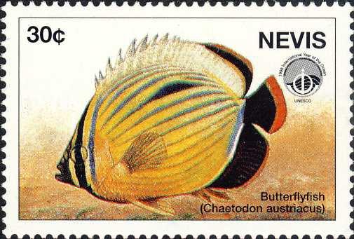 Chaetodon austriacus