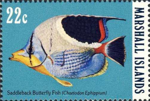 Chaetodon ephippium