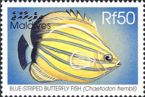 Chaetodon fremblii