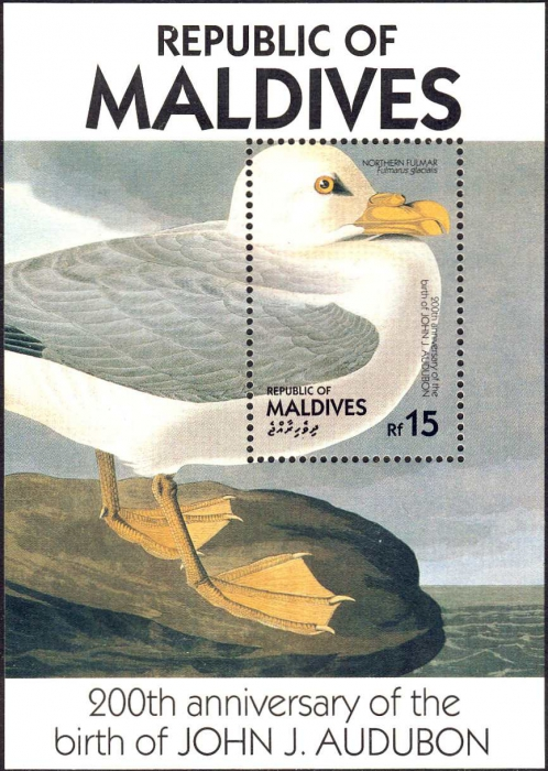 Fulmarus glacialis