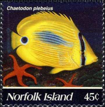 Chaetodon plebeius