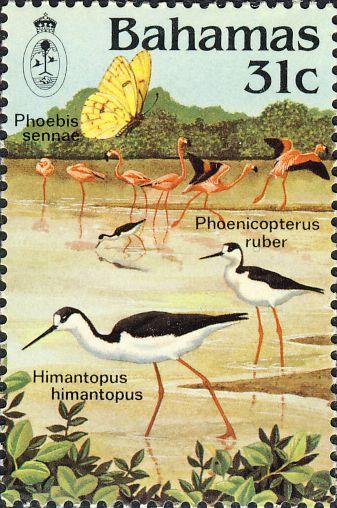 Himantopus himantopus & Phoenicopterus ruber