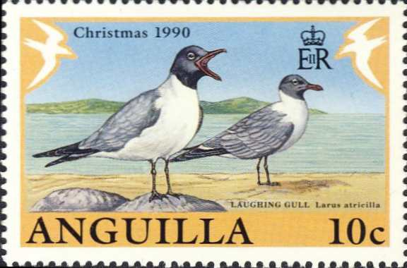 Larus atricilla
