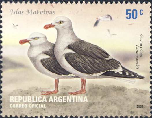 Larus scoresbii