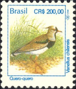 Vanellus chilensis