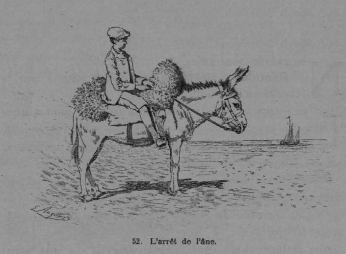 Auguin (1899, fig. 53)
