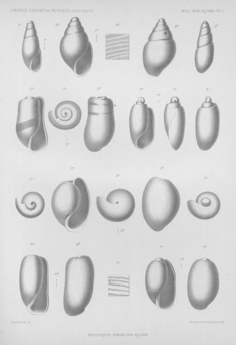 Dautzenberg (1889, pl. 1)