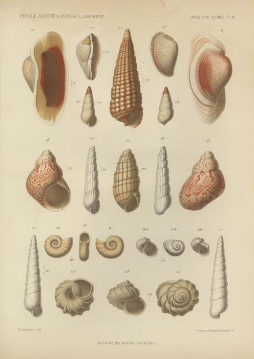 Dautzenberg (1889, pl. 4)