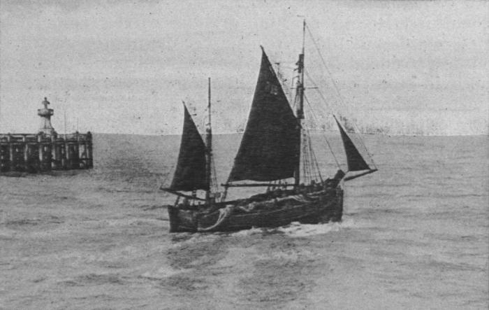 Verbrugghe (1932, fig. 13)