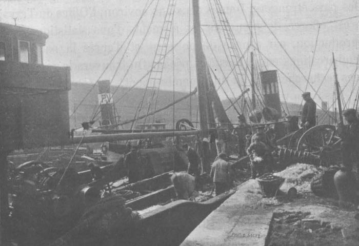 De Zuttere (1909, fig. 03)