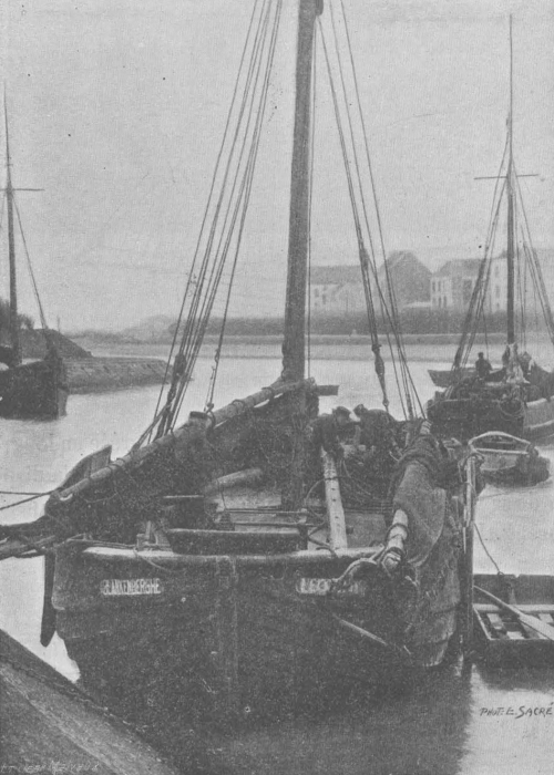 De Zuttere (1909, fig. 23)