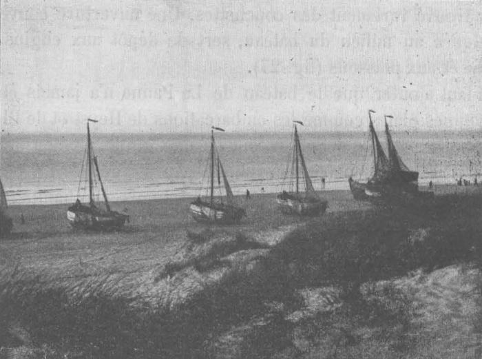 De Zuttere (1909, fig. 26)