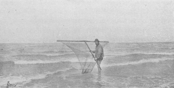 De Zuttere (1909, fig. 31)