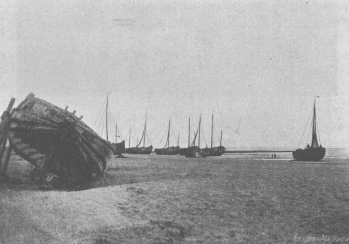 De Zuttere (1909, fig. 33)