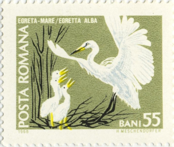 Egretta alba