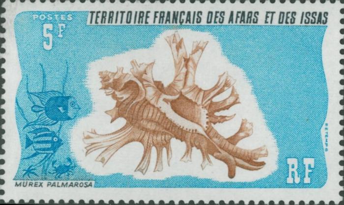 Murex palmarosae