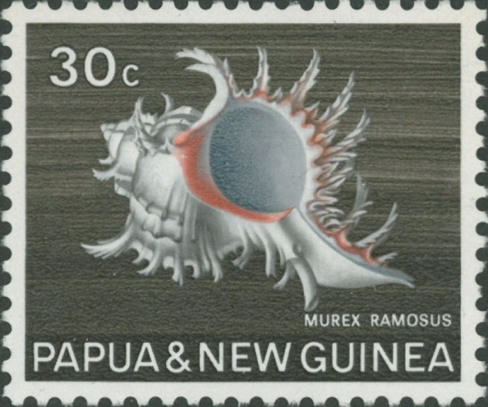 Murex ramosus