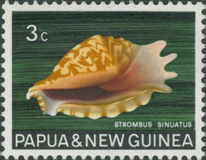 Strombus sinuatus
