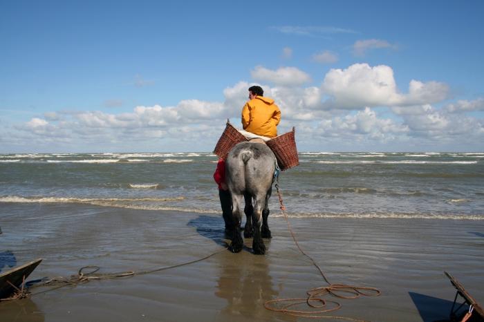 Garnaalvisser te paard
