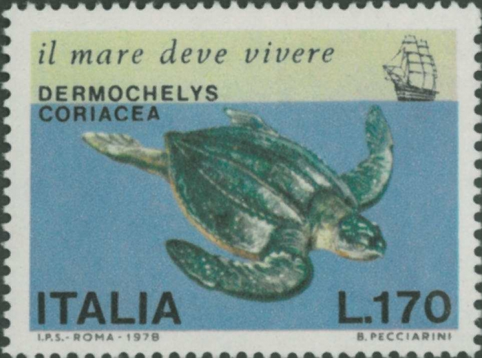 Dermochelys coriacea