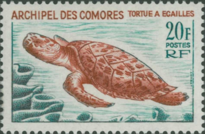 Eretmochelys imbricata
