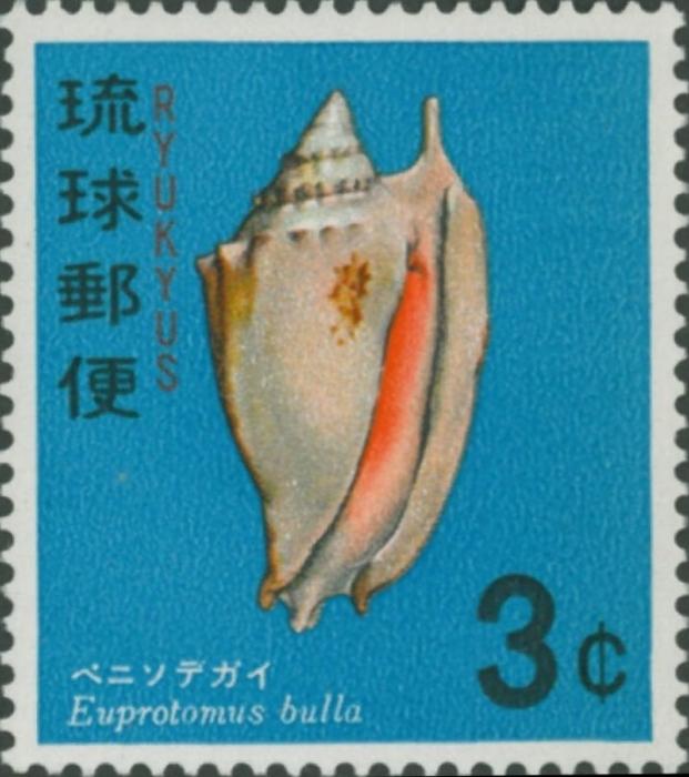 Euprotomus bullata