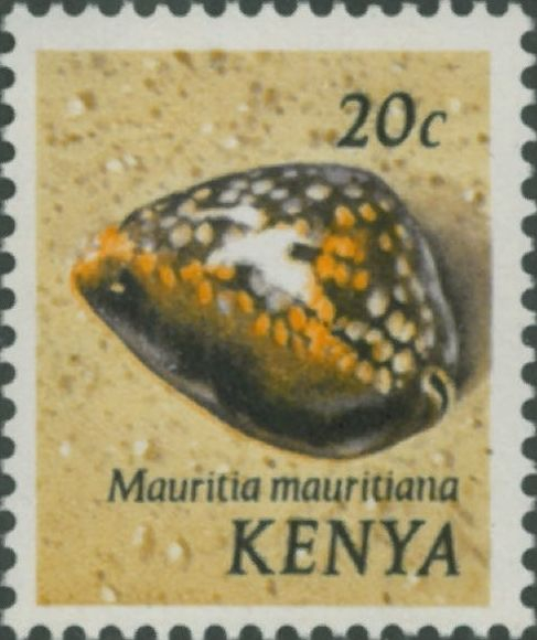 Mauritia mauritiana
