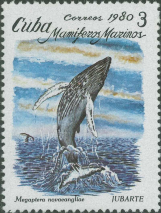 Megaptera novaeangliae