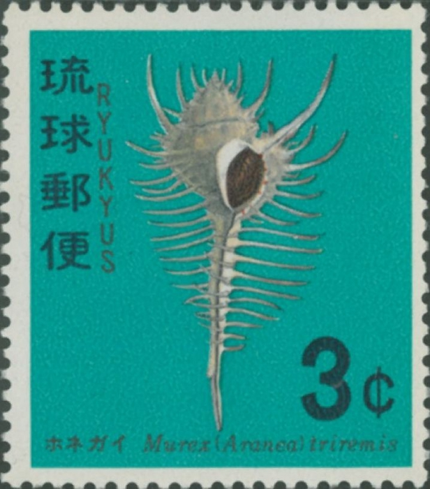 Murex pecten