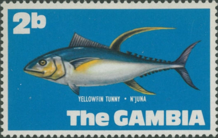 Thunnus albacares