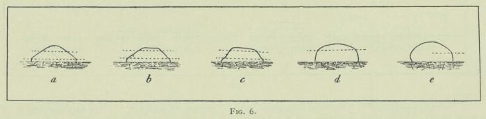 Arctowski (1902, fig. 06)