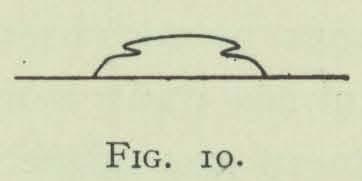 Arctowski (1902, fig. 10)
