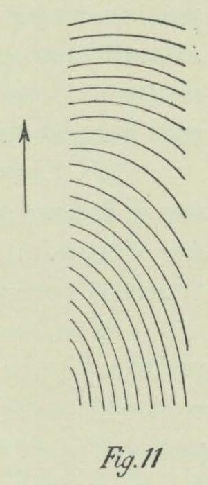 Dobrowolski (1903, fig. 11)