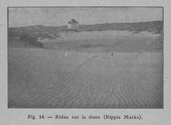 Rahir (1928, fig. 14)