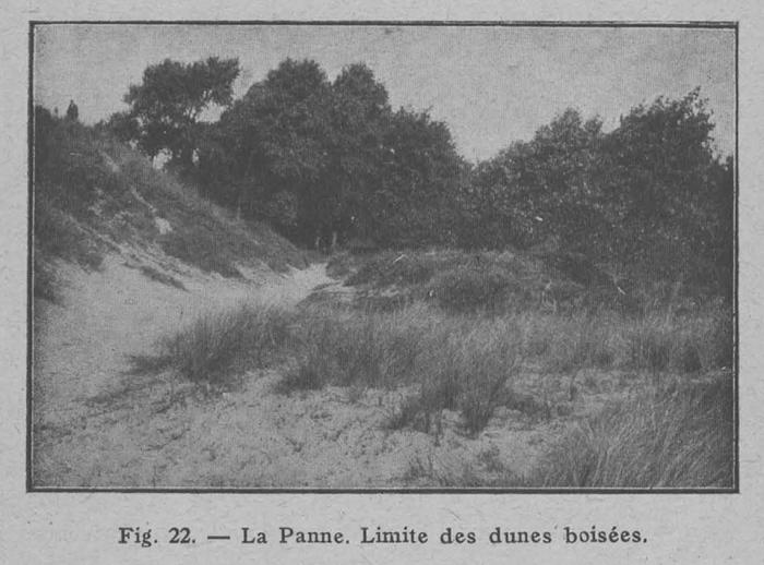 Rahir (1928, fig. 22)