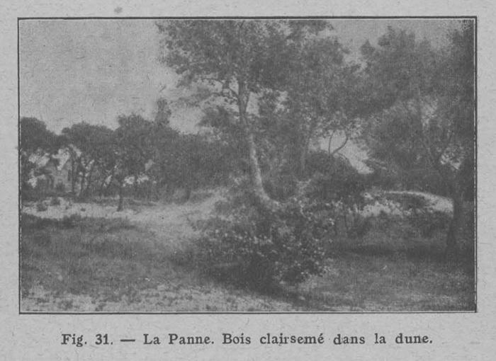 Rahir (1928, fig. 31)