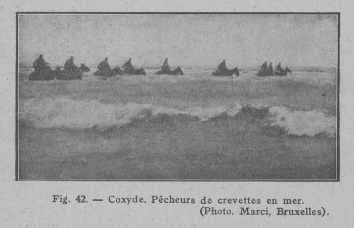 Rahir (1928, fig. 42)