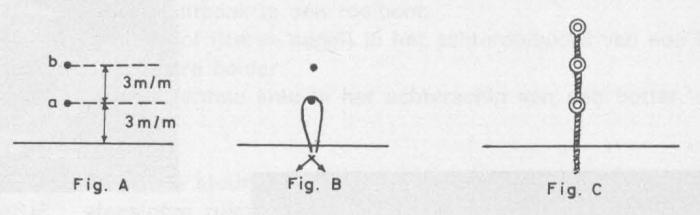 Desnerck (1976, fig. 478)