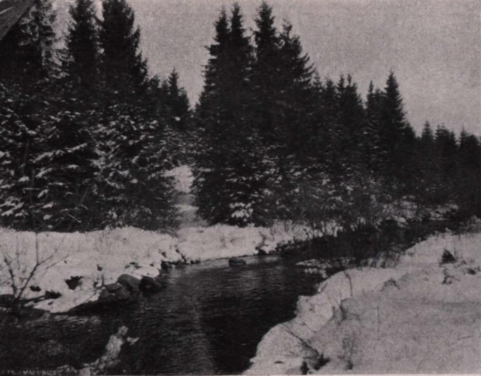 Gilson (1914, fig. 020)